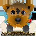 MisAdorablesPeludos.com Consejos para como cuidar a tu perro