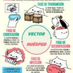 El ciclo del vida del Meme #infografia #infographic
